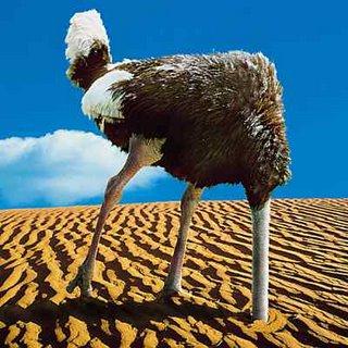 ostrich-burying-head.jpg