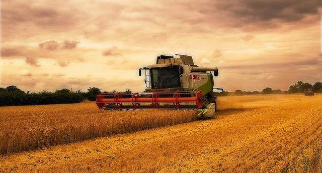 harvesting.jpg