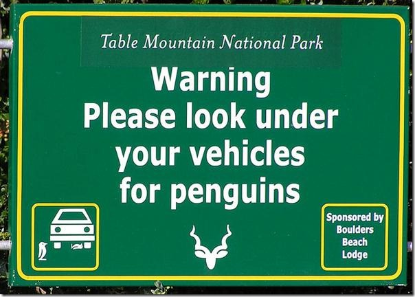penguin-warning.jpg