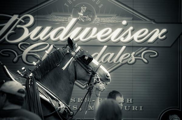 budweiser-horses.jpg