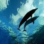 dolphins_thumb.jpg